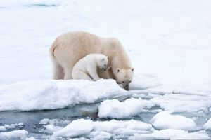 World leaders must cut emissions to curb Arctic heating, says Clean Arctic Alliance