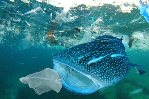 Maersk supports getting rid of ocean plastics