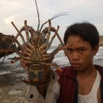Protecting Indonesia's lobster seeds is a matter of national interest