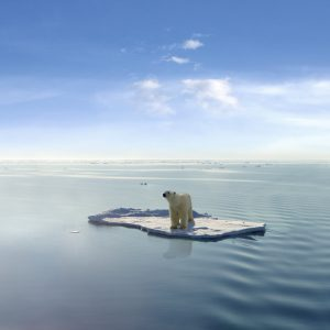 NGOs urge IMO chief to stop Arctic meltdown