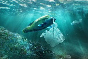 30 countries join global initiative to tackle marine litter
