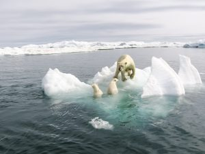 Black carbon emission from shipping is a big threat to Arctic Ocean