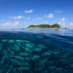 Indonesia builds momentum for a sustainable ocean economy