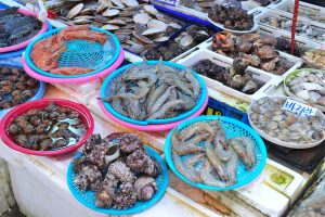 South Korea: New start-up brings hope to aging fishing industry