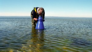 scientist looking with a aqua scope into the shallow water of the Sea.