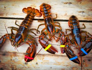 Indonesia, Vietnam can both gain from lobster aquaculture cooperation